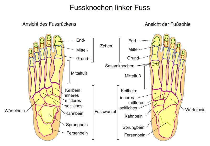 Allgemeines   Fuß, Füße, Sprunggelenk, Zehen, Fußanatomie, Lüneburg