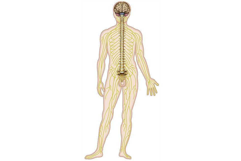 Aufbau des vegetativen Nervensystems | Das Störfeldgeschehen