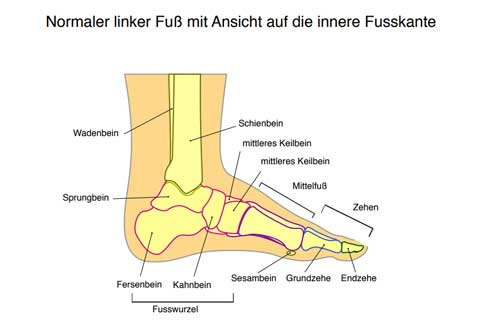 Längs- und Quergewölbe   Fuß, Füße, Sprunggelenk, Zehen, Fußanatomie, Lüneburg