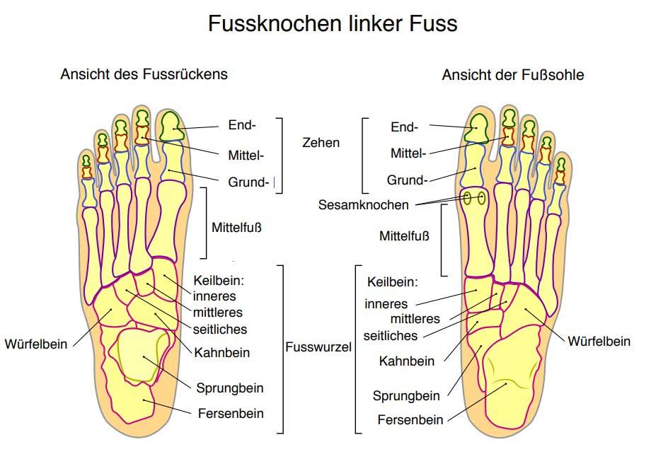 Die Fußwurzel besteht aus sieben Fußwurzelknochen   Fuß, Füße, Sprunggelenk, Zehen, Fußanatomie, Lüneburg