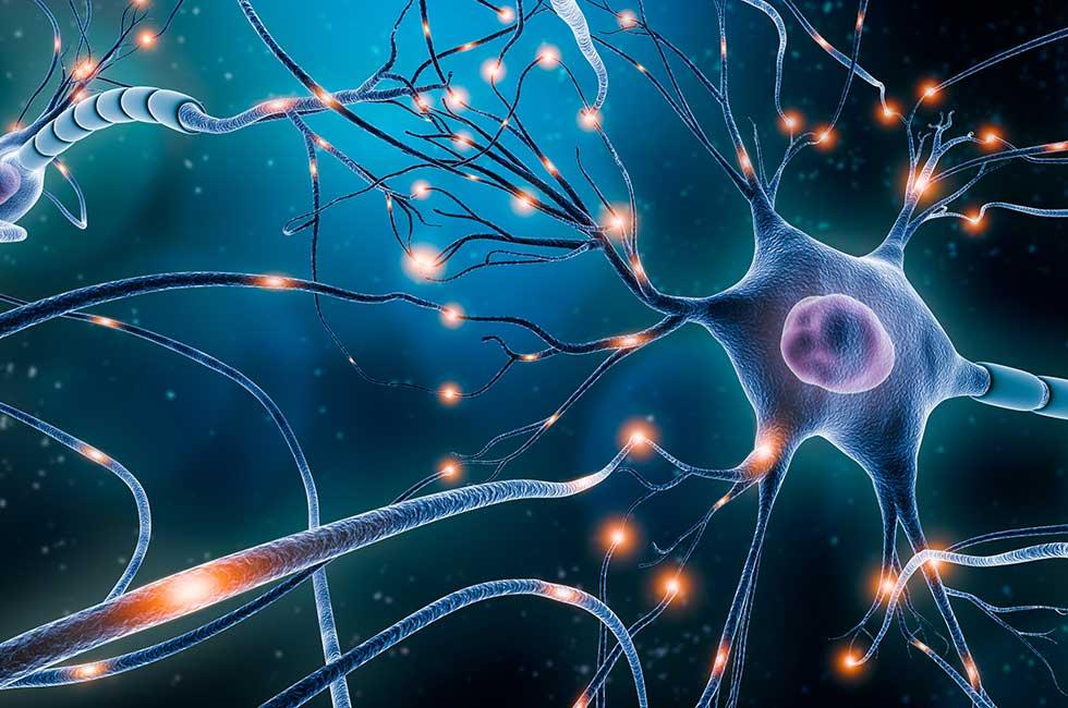 Die Wirkung des Acetylcholins | Neuraltherapie, das Störfeldgeschehen