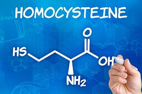 Homocystein | Arterienverkalkung